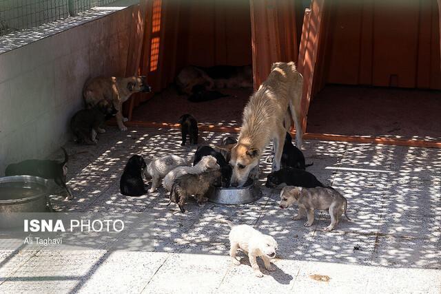 تغییر فرآیند نگهداری سگ های بلاصاحب