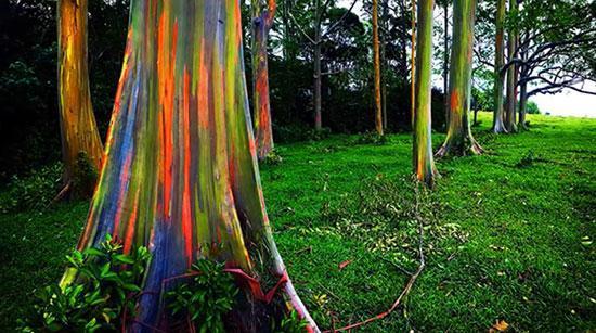 شگفت انگیزترین درختان جهان