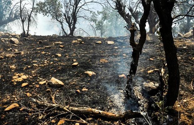 مهار آتش سوزی منطقه دره قیلا اندیکا