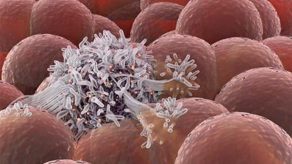 قرنطینه سلول های سرطانی برای جلوگیری از تغذیه و رشد آن ها