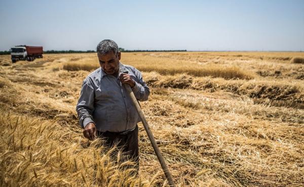 کمبود آب، مواد غذایی را گران می نماید؟
