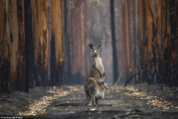تصاویر برگزیده حیات وحش و طبیعت از یک مسابقه عکاسی