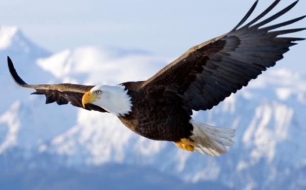 تعبیر خواب عقاب، دیدن عقاب در حال پرواز چه تعبیری دارد؟