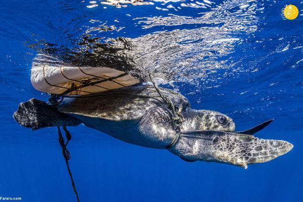 مسابقه عکاسی اقیانوس 2021